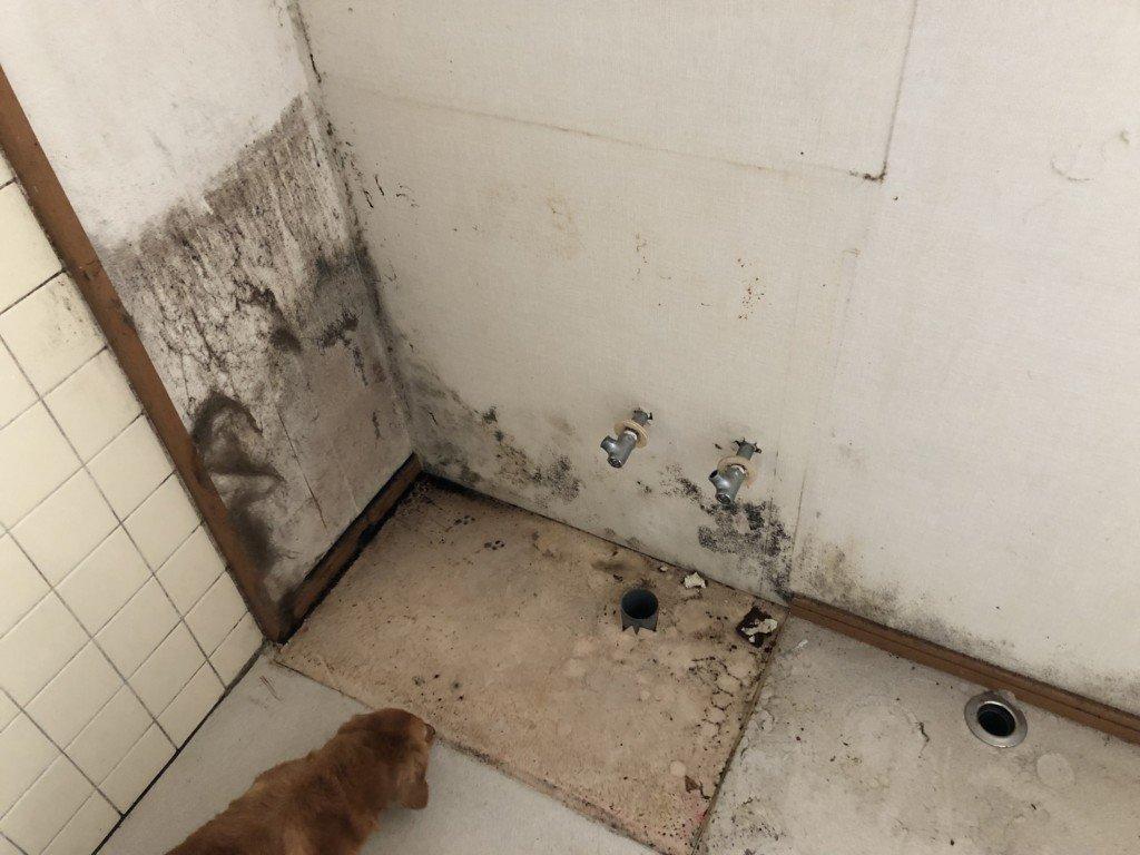 水漏れの洗面台があったところの壁紙